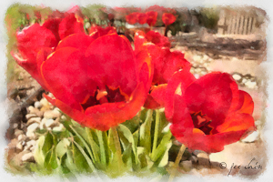 "Award-Digital Special Effects, Fee Chin, ""Sun Loving Tulips"""