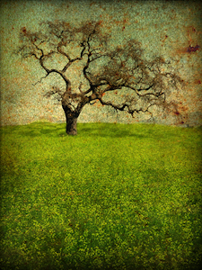"Award-Print Special Effects, Gail Dohrmann, ""Lonely Oak"""