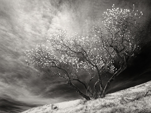 "Award-Print Realism, Gail Dohrmann, ""On Russian Ridge"""