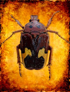 "Award-Digital Special Effects,  Gail Dohrmann, ""Fiery Bug"""