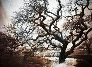"Award-Print-Special Effects, Gail Dohrmann, ""Rusted Oak"""