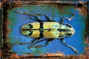 "Third Place-Print Special Effects, Gail Dohrmann, ""Yellow Bug"""