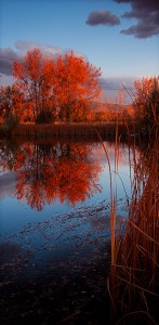 "Honorable Mention-Digital Realism, Tim Lacey, ""Cottonwood Mirror"""