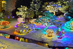 Award - Digital Special Topic, Amy Christensen, Garden Lights