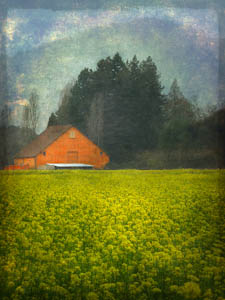 Award – Digital Special Effects – Gail Dohrmann, Red Barn with Mustard